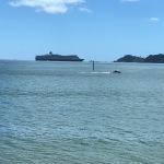 Bay of Islands 2018